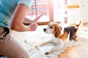 Дрессировка собаки в домашних условиях.