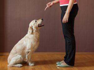Хозяин дрессирует собаку дома.