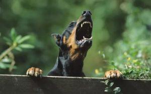 Собака охраняет двор.