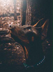 Собака ждет команду.