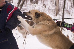 Собака помогает себе лапами.