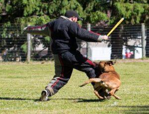 Собака в атаке.