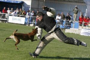 Собака атакует фигуранта.