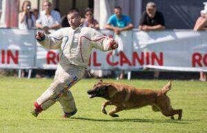 Собака бежит наперерез убегающему фигуранту.