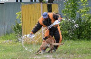 Фигурант сбивает атакующую собаку.