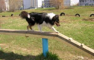 Собака проходит по буму.