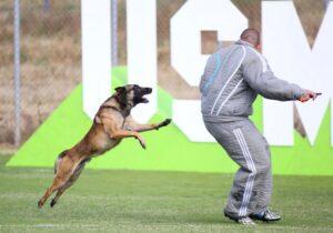 Атакующая собака в прыжке.