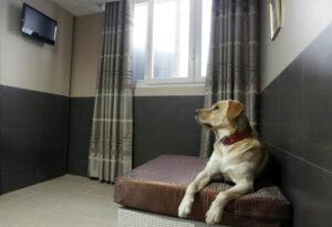 Собака лежит одна в комнате.