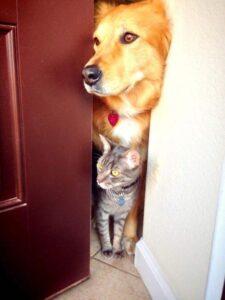 Собака за закрытой наполовину дверью.