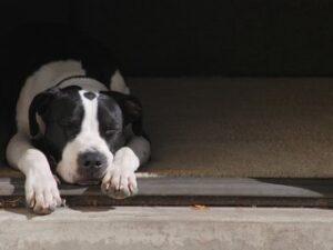 Собака лежит за порогом.
