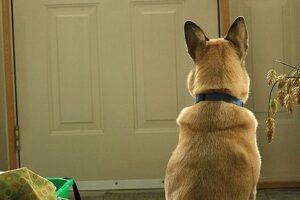 Собака ждёт хозяина у двери.
