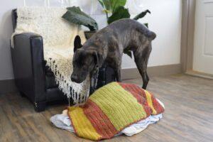 Собака ссыт на кресло.
